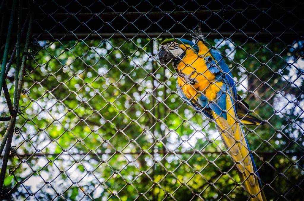 ehrenamtliche muslimische Gefängnisseelsorge - Photo by Marcelo Marques on Unsplash